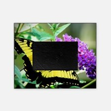 Eastern Tiger Swallowtail Picture Frame
