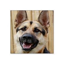 "big dog german shepherd fac Square Sticker 3"" x 3"""