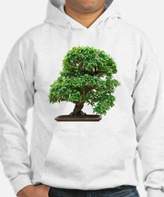 Punica Granatum bonsai tree Hoodie