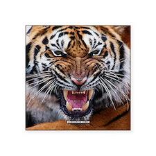 """Tiger Mad Square Sticker 3"""" x 3"""""""