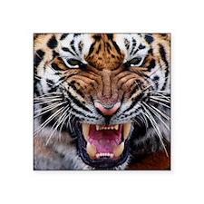 """Tigers, Big Cat Football Square Sticker 3"""" x 3"""""""