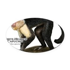 White-Headed Capuchin Oval Car Magnet
