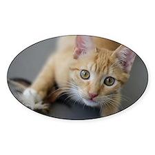 Yellow Tabby Kitten Birthday Decal