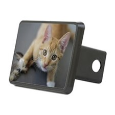 Yellow Tabby Kitten Birthd Hitch Cover