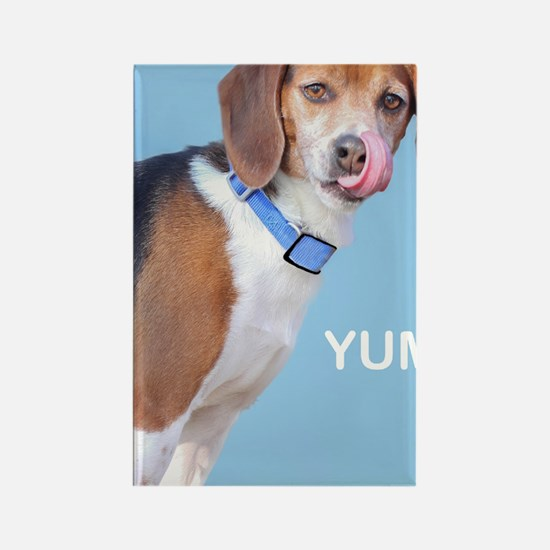 Beagle Yum Birthday Rectangle Magnet