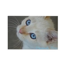 Blue Eyed Kitten Thank You Rectangle Magnet