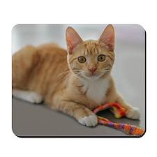 Yellow Tabby Kitten Birthday Mousepad