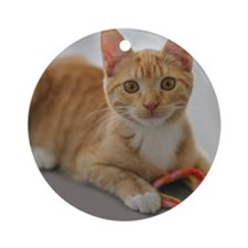Yellow Tabby Kitten Birthday Round Ornament