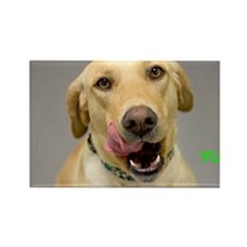 Yellow Lab Yum Birthday Card Rectangle Magnet