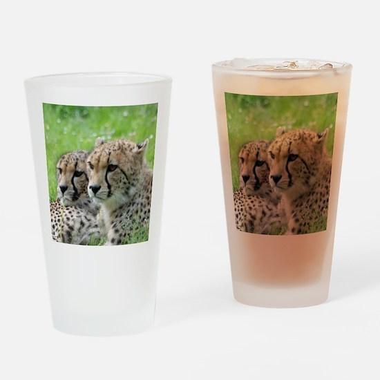Cheetah009 Drinking Glass