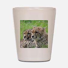 Cheetah009 Shot Glass