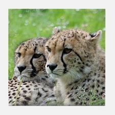 Cheetah009 Tile Coaster