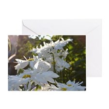 Marguerites Greeting Card