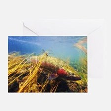 Rainbow Trout - Fly Fishing Greeting Card