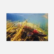 Rainbow Trout - Fly Fishing Rectangle Magnet