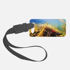 Rainbow Trout - Fly Fishing Luggage Tag