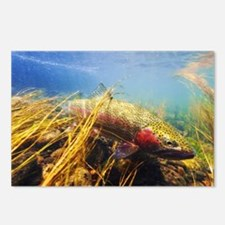 Rainbow Trout - Fly Fishi Postcards (Package of 8)