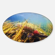 Rainbow Trout - Fly Fishing Sticker (Oval)