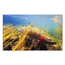 Rainbow Trout - Fly Fishing Decal