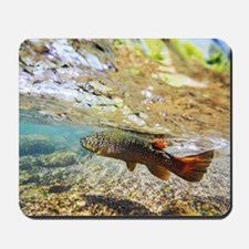 Spring Creek Brown Trout - Fly Fishing Mousepad