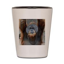 OrangUtan013 Shot Glass