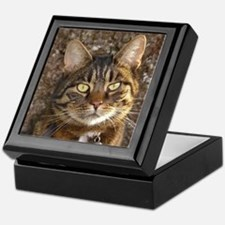Cat002 Keepsake Box