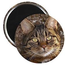 Cat002 Magnet