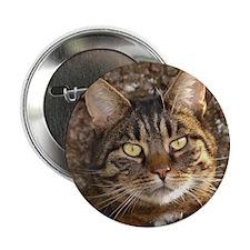 "Cat002 2.25"" Button"