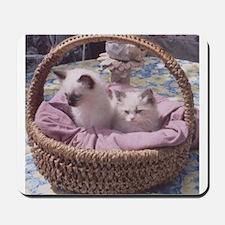 Ragdoll Kittens Mousepad