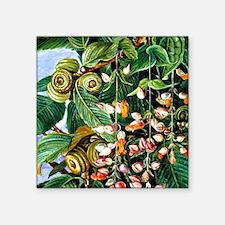 """Marianne North: A Darjeelin Square Sticker 3"""" x 3"""""""