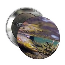 """Brown Trout - Catch and Release 2.25"""" Button"""