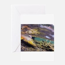 Brown Trout - Catch and Release Greeting Cards