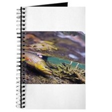 Brown Trout - Catch and Release Journal