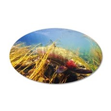 Rainbow Trout - Fly Fishing Wall Decal