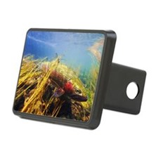 Rainbow Trout Hitch Cover