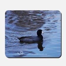 American Coot - The Blue Period Mousepad