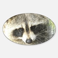 Raccoon Decal