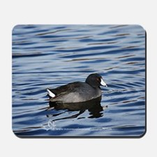 Coot Making Waves Mousepad