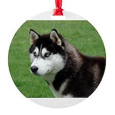 Siberian Husky Puppy Ornament - Taj Ornament