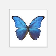 "MORPHO DIDIUS D Square Sticker 3"" x 3"""