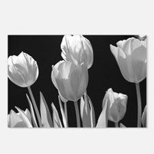 Black and White Tulips Postcards (Package of 8)