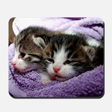 Kittens, Cuddly Kittens Wrapped in Blank Mousepad
