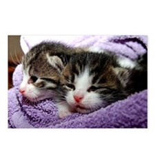 Kittens, Cuddly Kittens W Postcards (Package of 8)