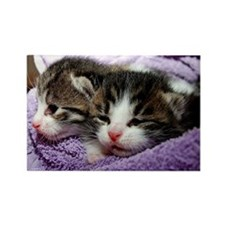 Kittens, Cuddly Kittens Wrapped i Rectangle Magnet
