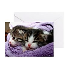 Kittens, Cuddly Kittens Wrapped in B Greeting Card