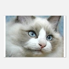 Funny Ragdoll cat Postcards (Package of 8)