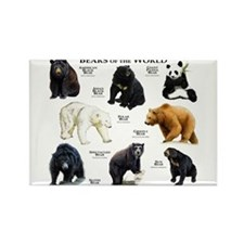 Bears of the World Rectangle Magnet