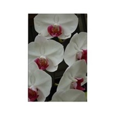 White Orchid Rectangle Magnet