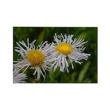 Macro Flower Rectangle Magnet