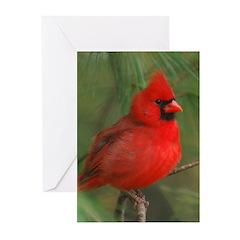 Male Cardinal Christmas Card